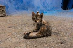 Beau chat, se reposant sur la rue photo libre de droits