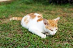 Beau chat sur l'herbe verte - image photo stock