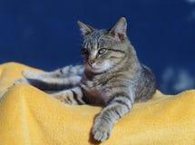 Beau chat tigré Image libre de droits