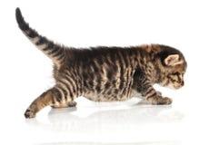 Beau chaton âgé mignon de 20 jours allant de côté Images stock