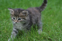 Beau chaton Photographie stock