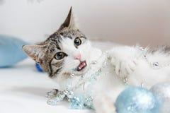 Beau chaton avec des boules de Noël et un arbre de Noël Chaton de nouvelle année Photographie stock libre de droits