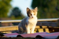 Beau chaton dans les rayons du coucher du soleil image libre de droits
