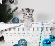 Beau chaton dans un panier sous l'arbre de Noël Photos libres de droits
