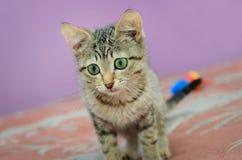 Beau chaton rayé photographie stock