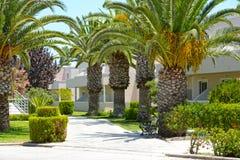 Beau chemin avec des palmiers et un type d'hôtel image libre de droits