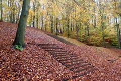 Beau chemin d'automne dans la forêt avec les feuilles et les arbres colorés Photographie stock
