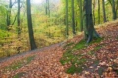 Beau chemin d'automne dans la forêt avec les feuilles et les arbres colorés Photos stock