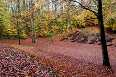 Beau chemin d'automne dans la forêt avec les feuilles et les arbres colorés images stock