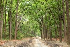 Beau chemin dans la forêt dense de Jim Corbett Photographie stock libre de droits