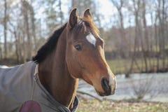 Beau cheval images libres de droits