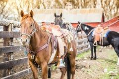 Beau cheval Image libre de droits