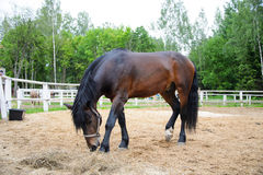 Beau cheval Image stock