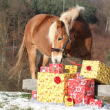 Beau cheval avec des cadeaux de Noël Photo stock