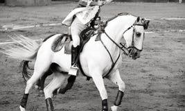 Beau cheval blanc dans le bullring, corrida Photographie stock libre de droits