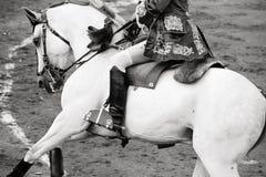 Beau cheval blanc dans le bullring, corrida Image libre de droits