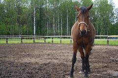 Beau cheval dans le village image libre de droits