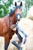 Beau cheval de baie examinant l'appareil-photo tenant la fille proche Photographie stock libre de droits