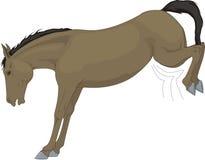 beau cheval de ferme de retrait Photo libre de droits