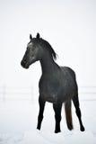 Beau cheval extérieur en hiver Photographie stock libre de droits
