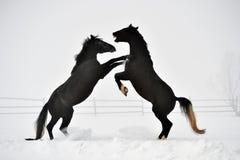 Beau cheval fonctionnant en hiver image libre de droits