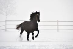 Beau cheval fonctionnant en hiver Photo stock