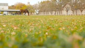 Beau cheval frôlant sur un ranch Mouvement lent banque de vidéos