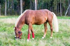 Beau cheval mince dans le pâturage Photos stock