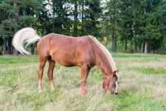 Beau cheval mince dans le pâturage Photo libre de droits