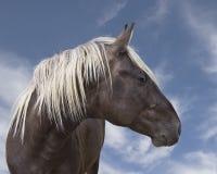 Beau cheval noir brun avec la crinière blonde Image libre de droits