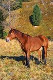 Beau cheval rouge. Photo libre de droits