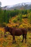 Beau cheval rouge. Photos libres de droits