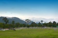Beau cheval sur le ranch photo libre de droits