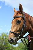 Beau cheval sur un pré en été image libre de droits
