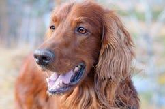 Beau chien. Photo stock