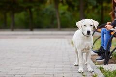 Beau chien blanc ayant l'amusement dans le parc Concept d'animal familier Photo stock