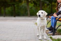 Beau chien blanc ayant l'amusement dans le parc Concept d'animal familier Photographie stock