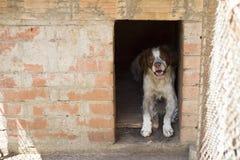 Beau chien dans la cage Image stock