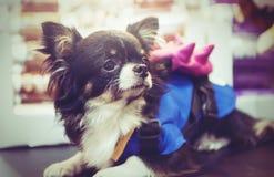 Beau chien de bébé dans l'effet modifié la tonalité foncé d'Instagram Image stock
