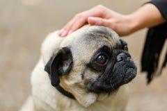 Beau chien de cutie marchant avec le propriétaire dehors Concept d'animal familier Photo stock