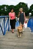 Beau chien de golden retriever et le grand ami d'homme Images libres de droits