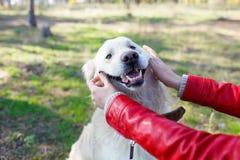 Beau chien de sourire marchant avec le propriétaire dehors Concept d'animal familier Images libres de droits