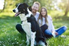 Beau chien mignon en nature prise pour la promenade par des personnes Photos stock