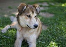 Beau chien se reposant dans l'herbe verte le jour chaud d'été images stock