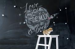 Beau chiot sur un banc blanc Tir de studio Vacances de ressort et d'amour Photographie stock