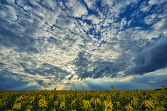 Beau ciel au-dessus de gisement de graine de colza image libre de droits