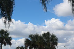 Beau ciel bleu de Maui, avec les nuages gonflés blancs et les palmiers verts Image libre de droits