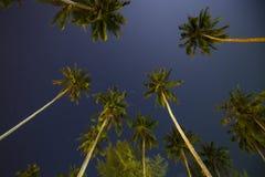 Beau ciel nocturne tropical avec des palmiers de noix de coco et des étoiles, Thaïlande photographie stock