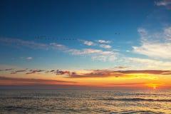 Beau cloudscape avec des oiseaux de vol au-dessus de la mer, tir de lever de soleil Image libre de droits