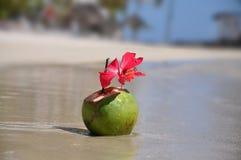 Beau cocktail dans un Coco Photos libres de droits